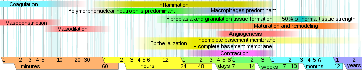 Phases of wound healing https://upload.wikimedia.org/wikipedia/commons/a/a6/Wound_healing_phases.svg