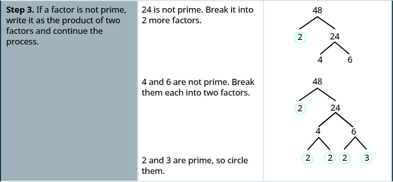 """One row down, the first cell says: """"Step 3. If a factor is not prime, write it as the product of two factors and continue the process."""" In the second cell, the instructions say: """"24 is not prime. Break it into 2 more factors."""" The third cell contains the original factor tree, with 48 at the top and two downward-pointing branches terminating at 2, which is underlined, and 24. Two more branches descend from 24 and terminate at 4 and 6 respectively. One line down, the instructions in the middle of the cell say """"4 and 6 are not prime. Break them each into two factors."""" In the cell on the right, the factor tree is repeated once more. Two branches descend from the 4 and terminate at 2 and 2. Both 2s are circled. Two more branches descend from 6 and terminate at a 2 and a 3, which are both circled. The instructions on the left say """"2 and 3 are prime, so circle them."""""""