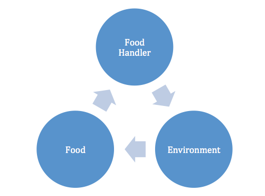 The cycle of bacterial transmission goes from food handler to environment to food and back to the Food Handler