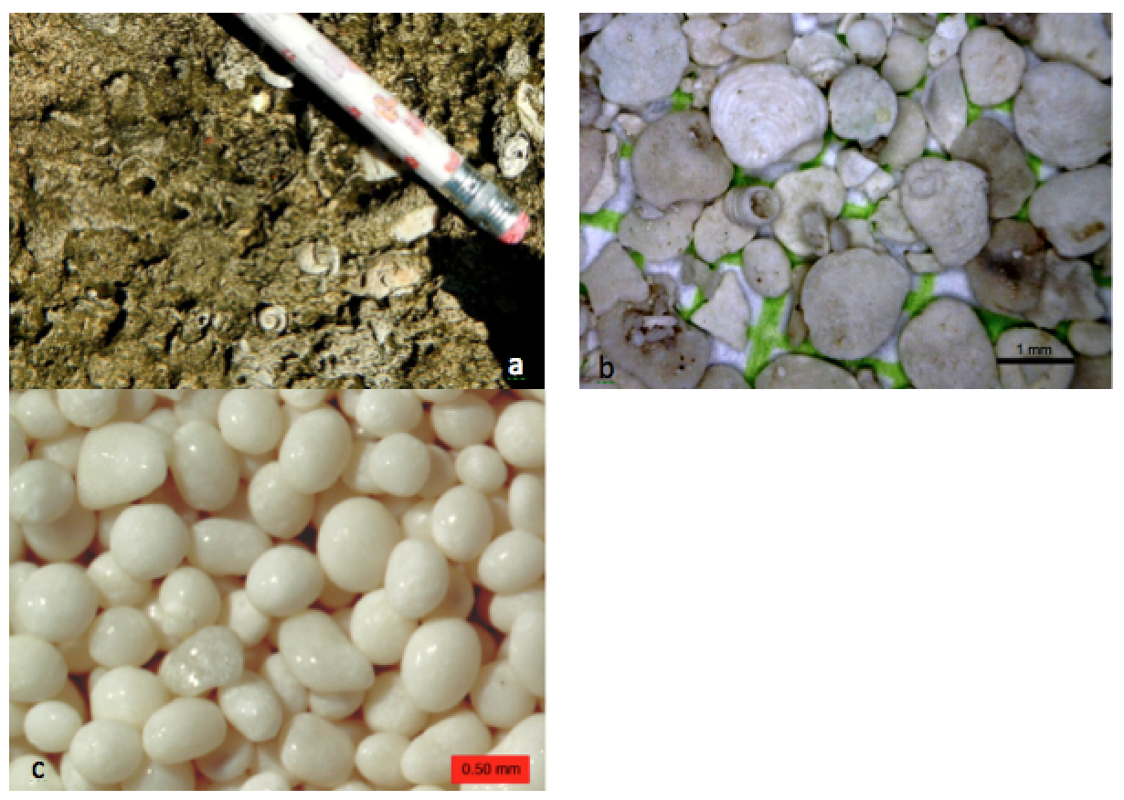 Carbonate rocks and sediments: (a) mollusc-rich limestone formed in a lagoon area at Ambergris, Belize, (b) foraminifera-rich sediment from a submerged carbonate sandbar near to Ambergris, Belize (c) ooids from a beach at Joulters Cay, Bahamas. [SE]