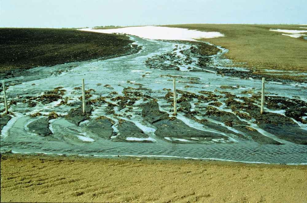 Soil erosion by rain and channelled runoff on a field in Alberta. [from Alberta Agriculture and Rural Development, http://bit.ly/1UU0cM0, used with permission]