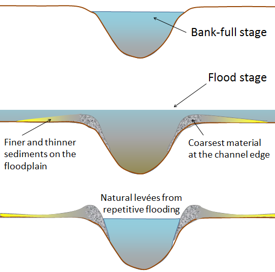 Figure 13.17 The development of natural levées during flooding of a stream. The sediments of the levée become increasingly fine away from the stream channel, and even finer sediments — clay, silt, and fine sand — are deposited across most of the flood plain. [SE]