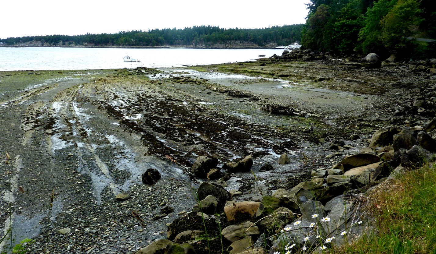 Figure 17.12 A wave-cut platform in bedded sedimentary rock on Gabriola Island, B.C. The wave-eroded surface is submerged at high tide. [SE]