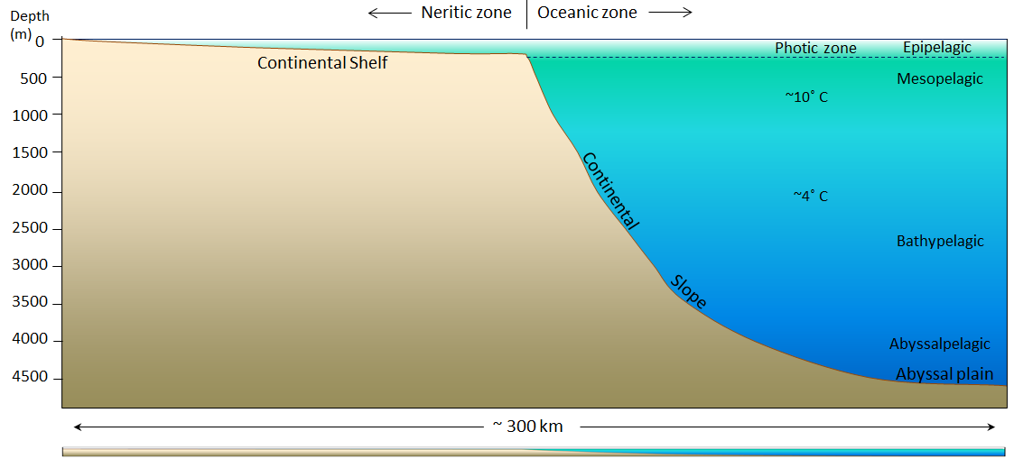 Figure 18.4 The generalized topography of the Atlantic Ocean floor within 300 km of Nova Scotia. The vertical exaggeration is approximately 25 times. The panel at the bottom shows the same profile without vertical exaggeration. [SE]