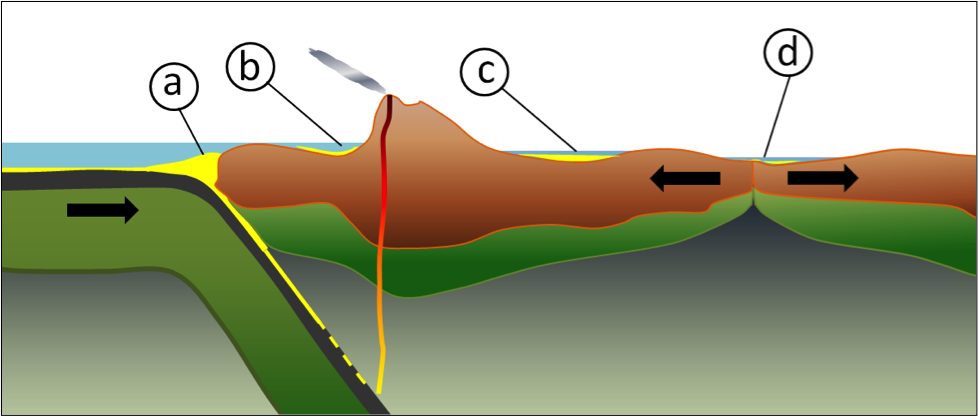 Figure 6.18 Some of the more important types of tectonically produced basins: (a) trench basin, (b) forearc basin, (c) foreland basin, and (d) rift basin.
