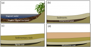 Figure 20.18 Formation of coal: (a) accumulation of organic matter within a swampy area; (b) the organic matter is covered and compressed by deposition of a new layer of clastic sediments; (c) with greater burial, lignite coal forms; and (d) at even greater depths, bituminous and eventually anthracite coal form. [SE]