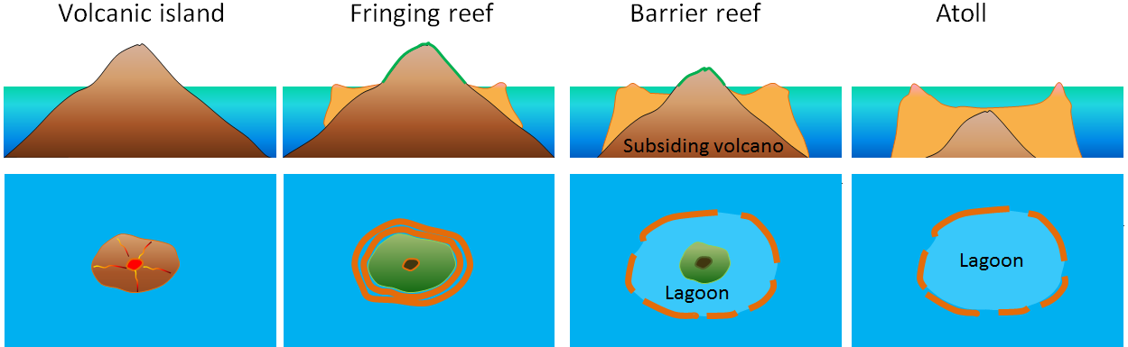 Figure 18.8 The formation of a fringing reef, a barrier reef, and an atoll around a subsiding tropical volcanic island. [SE]