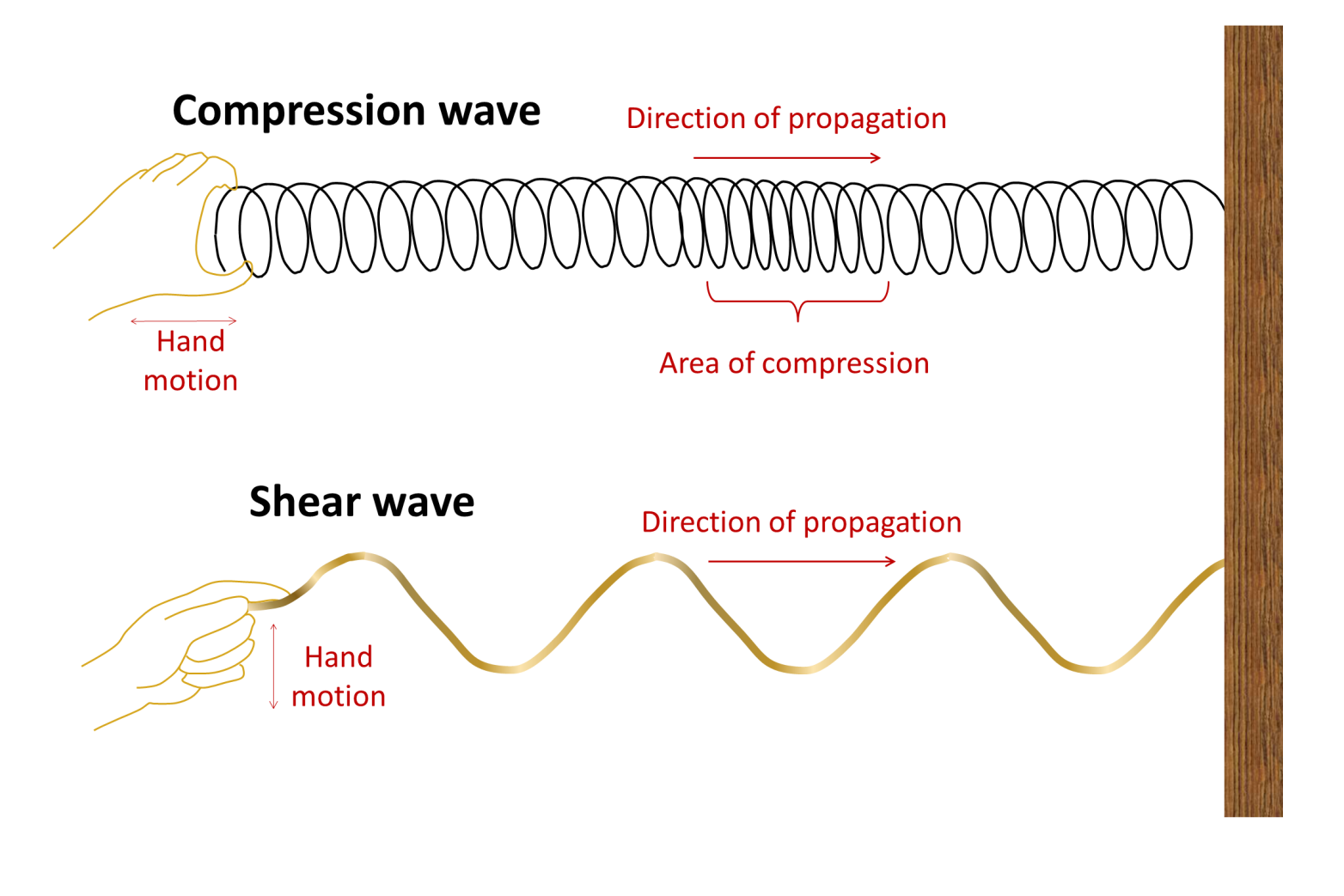 A compression wave can be illustrated by a spring (like a Slinky) that is given a sharp push at one end. A shear wave can be illustrated by a rope that is given a quick flick