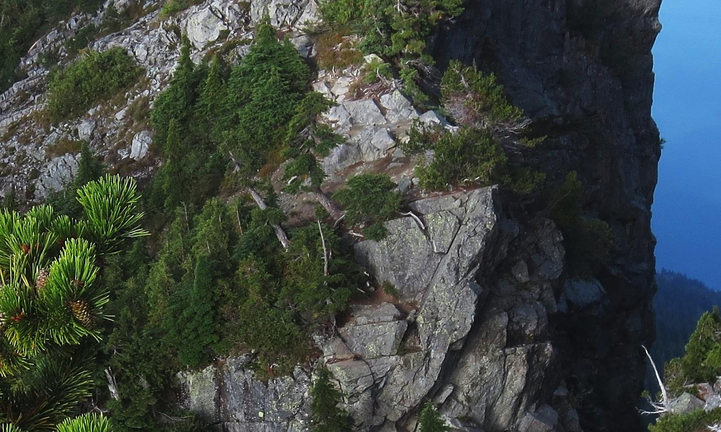 Photograph of Conifers growing on granitic rocks at The Lions, near to Vancouver BC