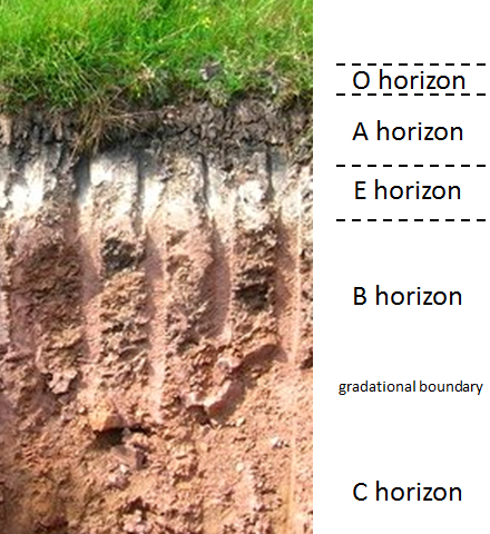 Soil horizons in a podsol from a site in northeastern Scotland. O: organic matter A: organic matter & mineral material E: leached layer B: accumulation of clay, iron etc. C: incomplete weathering of parent materia