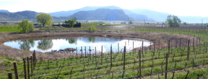 Figure 16.33 A kettle lake amid vineyards and orchards in the Osoyoos area of B.C. [SE]