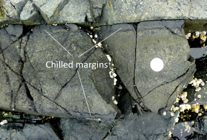 Figure 3.22 A mafic dyke with chilled margins within basalt at Nanoose, B.C. The coin is 24 mm in diameter. The dyke is about 25 cm across and the chilled margins are 2 cm wide.