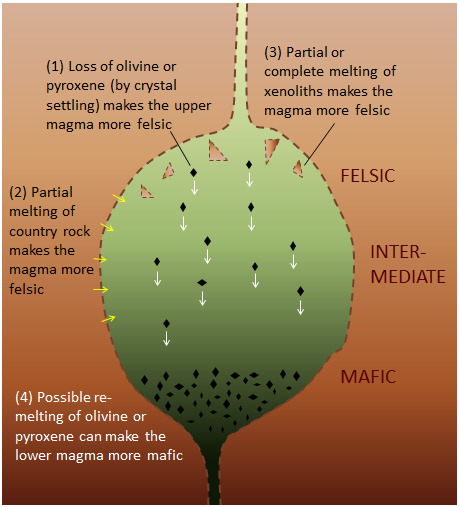 Magma Chambers, (1) at the top, loss of olivine or pyroxene (by crystal settling) makes the upper magma more felsic, (2) partial melting of country rock makes the magma more felsic (3) partial or complete melting of xenoliths makes the magma more felsic, (4) possible re-melting of olivine or pyroxene can make the lower magma more mafic