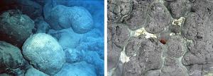 Figura 4.21 basaltos almohada del fondo marino modernos y antiguos (izquierda) almohadas del lecho marino modernos en el sur del Pacífico [NOAA, desde http://en.wikipedia.org/wiki/ basalto # Mediaviewer / Archivo: Pillow_basalt_crop_l.jpg] (derecha ) Desgastado 40 a 50 Ma almohadas en la orilla de la isla de Vancouver, cerca de Sooke. Las almohadas son de 30 a 40 cm de diámetro. [SE]