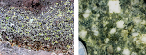 Figure 3.15 Porphyritic textures: volcanic porphyry (left – olivine crystals in Hawaiian basalt) and intrusive porphyry (right) [SE]