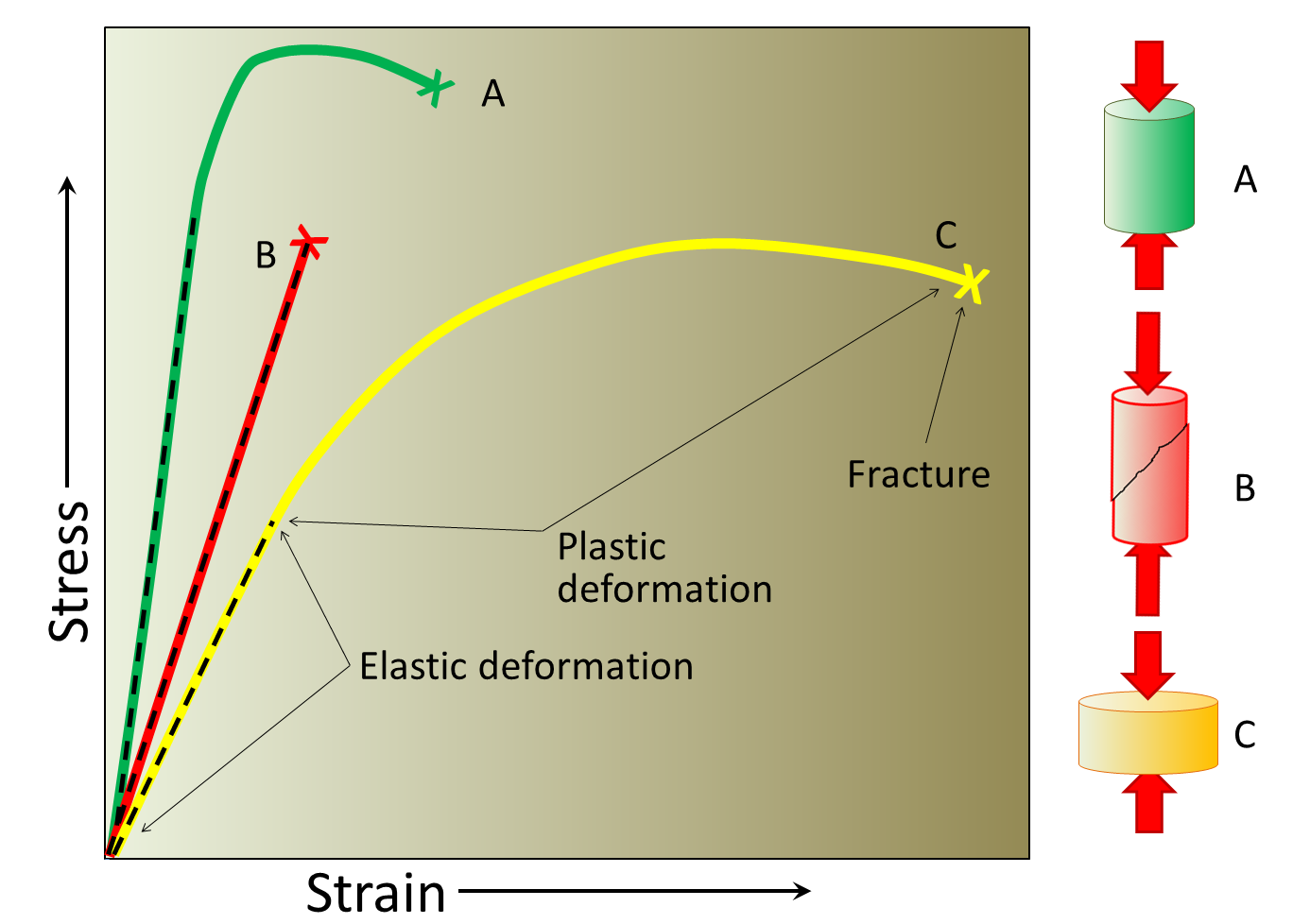 Figure 12.3 The varying types of response of geological materials to stress.  The straight dashed parts are elastic strain and the curved parts are plastic strain.  In each case the X marks where the material fractured.  A, the strongest material deforms relatively little and breaks at a high stress level.  B, strong but brittle, shows no plastic deformation and breaks after relatively little elastic deformation.  C, the most deformable, only breaks after significant elastic and plastic strain.  The three deformation diagrams on the right show A and C before breaking and B after breaking. [SE]