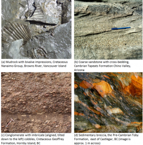 Figure 6.8 Examples of various clastic sedimentary rocks.
