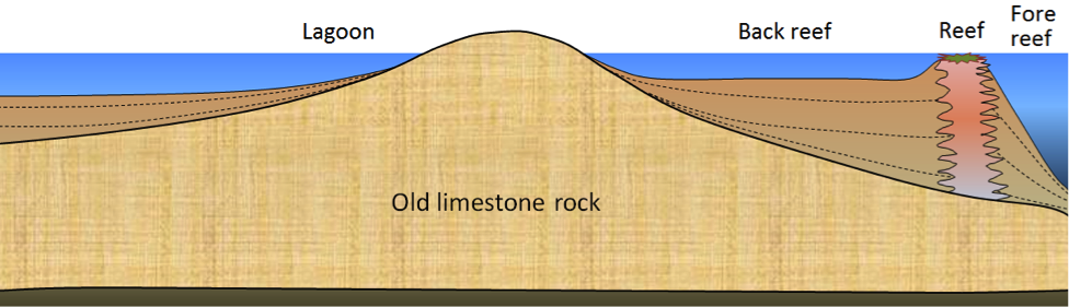 Figure 6.10 Schematic cross-section through a typical tropical reef.