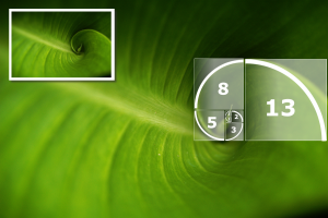 The golden ratio is a constant that appears in nature
