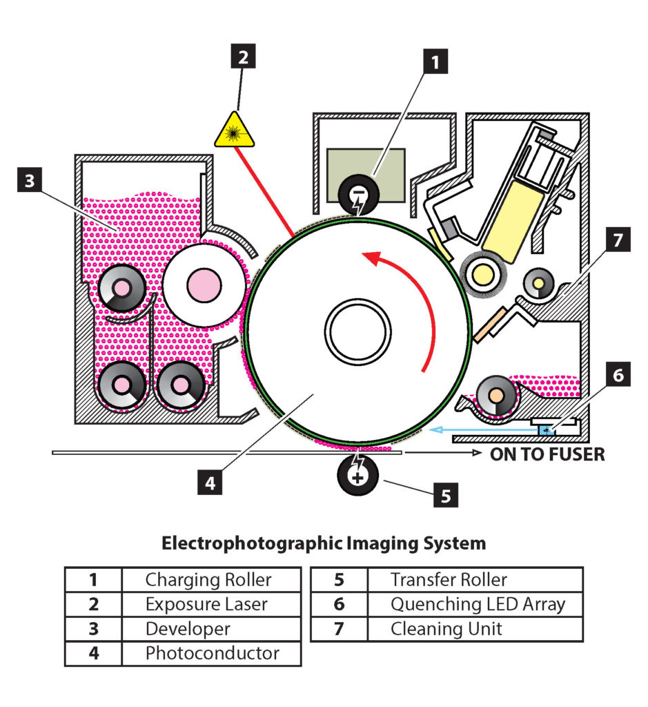 the 7 stages of electrophotographic imaging system are 1. charging roller, 2. exposure laser, 3. developer, 4. photoconductor. 5. transfer roller, 6. quenching LED array, 7. cleaning unit