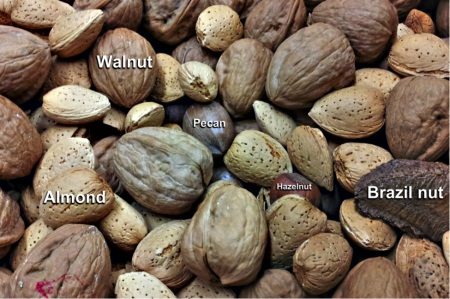 Images of a variety of nuts