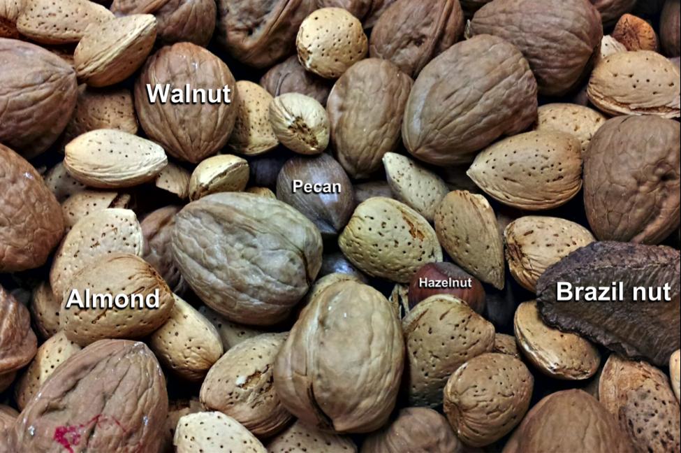 Nuts and Nut-like Ingredients – Understanding Ingredients ...