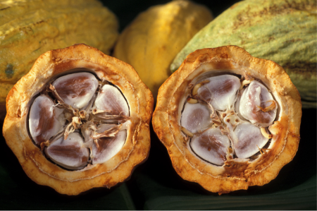 "Figure 11: ""Cacao-pod-k4636-14"" by Keith Weller, USDA ARS - Licensed under Public Domain via Wikimedia Commons - https://commons.wikimedia.org/wiki/File:Cacao-pod-k4636-14.jpg#/media/File:Cacao-pod-k4636-14.jpg"