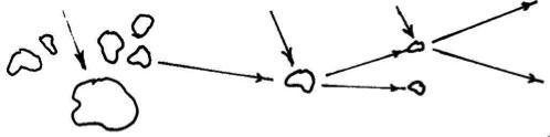 Diastatic Activity.