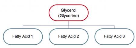 Diagram showing one molecule of glycerol along with three fatty acids.