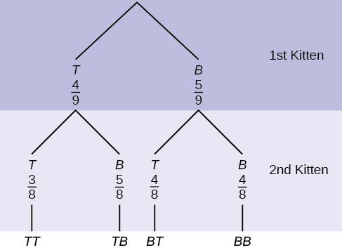 This is a tree diagram with branches showing probabilities of kitten choices. The first branch shows two lines: T 4/9 and B 5/9. The second branch has a set of 2 lines for each first branch line. Below T 4/9 are T 3/8 and B 5/8. Below B 5/9 are T 4/8 and B 4/8. Multiply along each line to find probabilities of possible combinations.