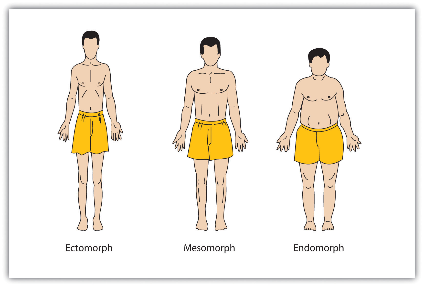 personality and behaviour approaches and measurement  william sheldon erroneously believed that people different body types had different personalities