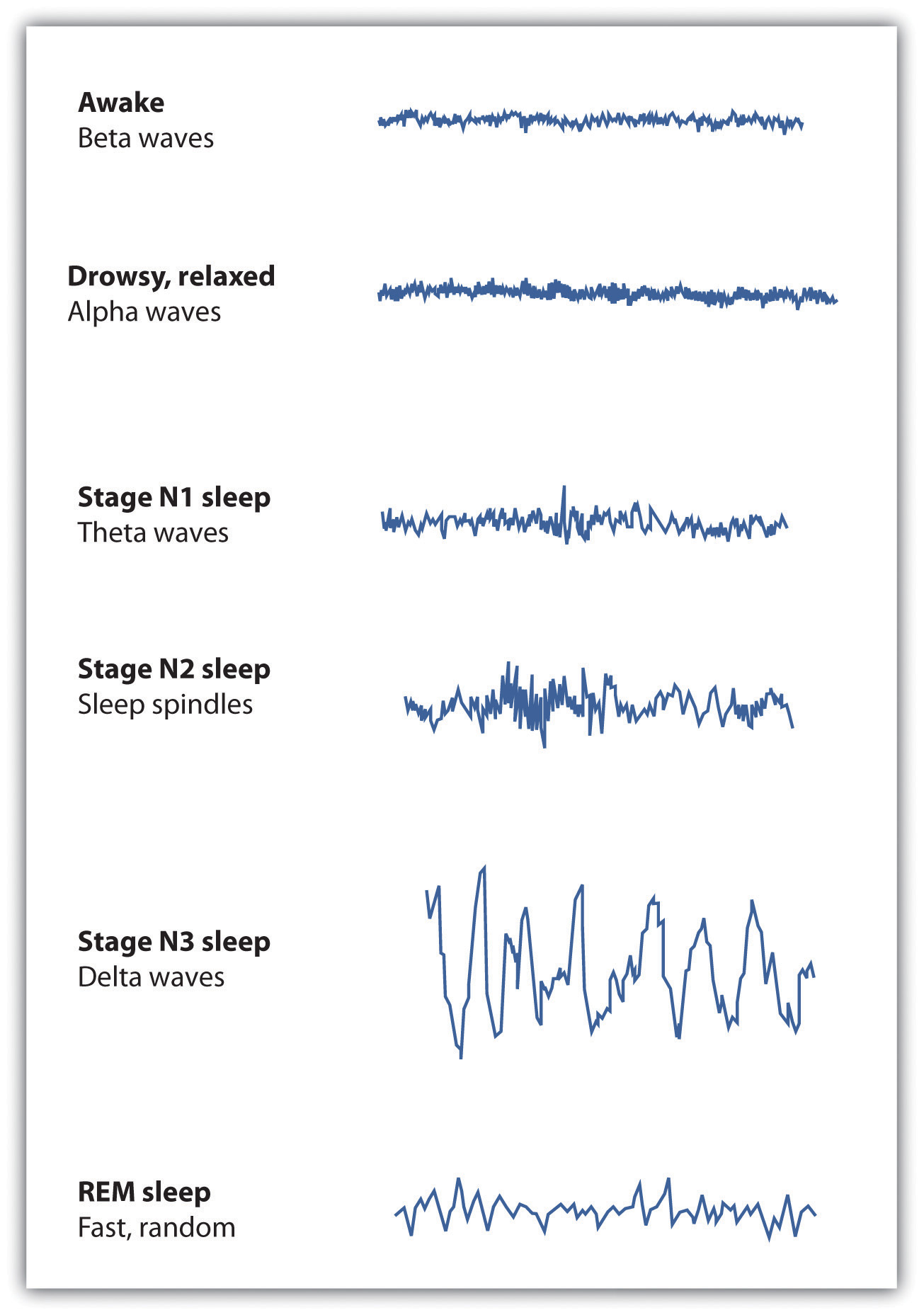 5 stages of sleep psychology