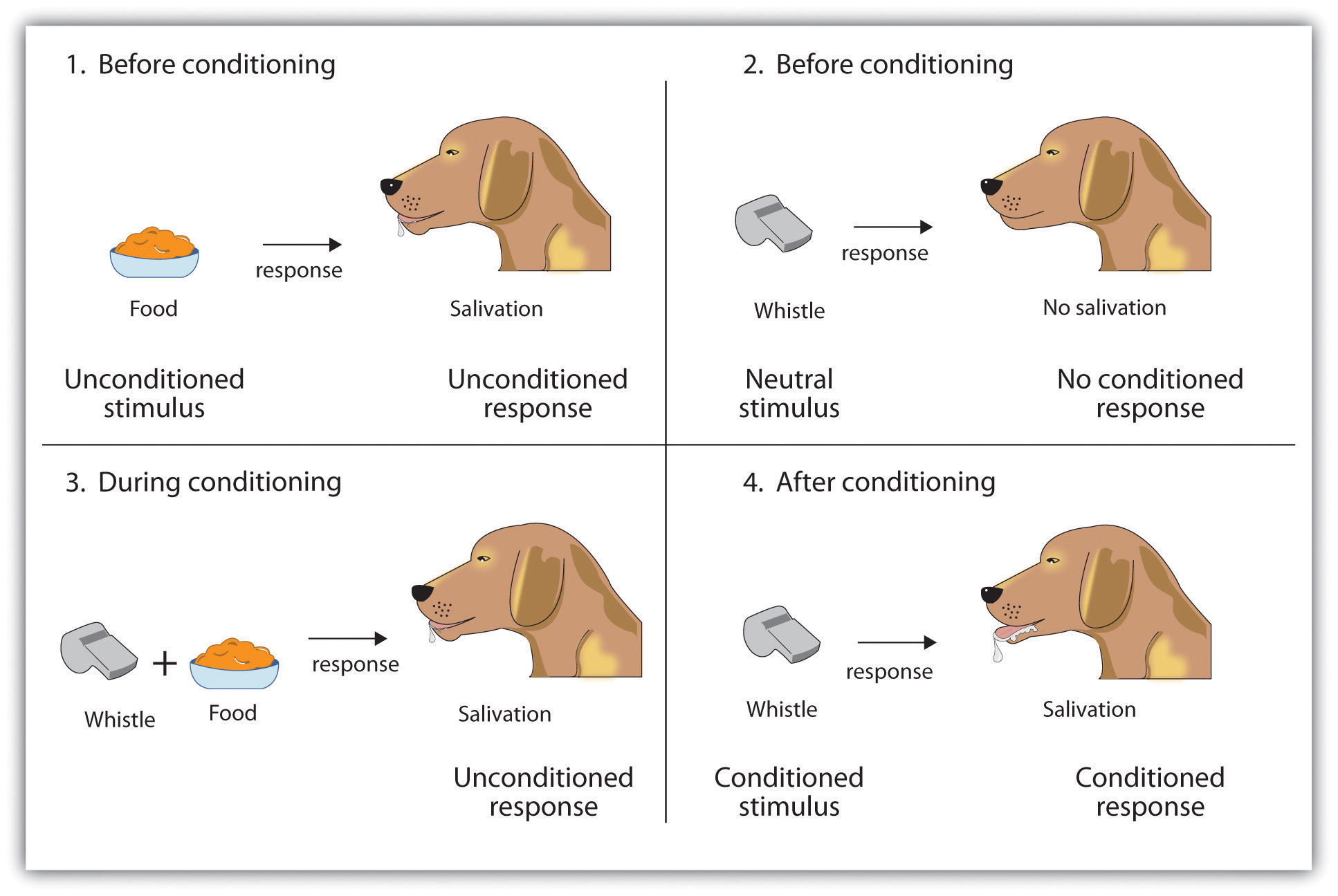 classical conditioning child development