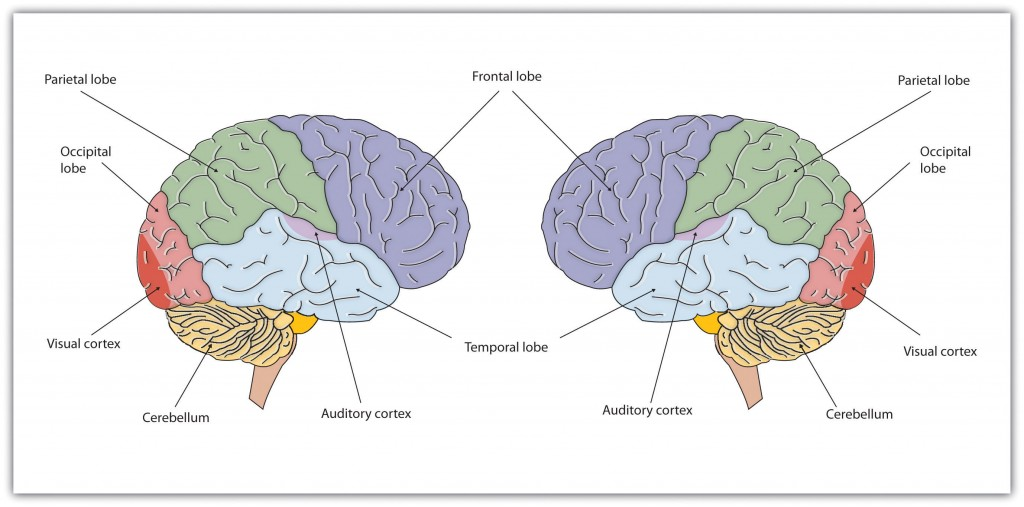 an analysis of the control of our thinking and the principle of the language Tations of the social mind, which also relate the individual and the social, and the  micro-  ments of critical perspectives in the study of language, discourse and  com-  control of knowledge crucially shapes our interpretation of the world, as.
