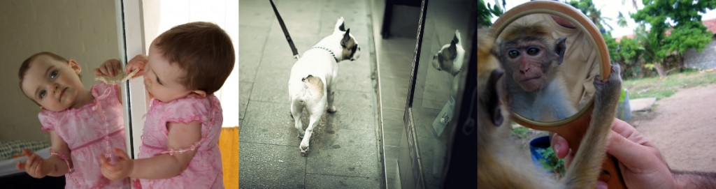 Dog That Can Pass The Mirror Test