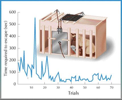 Operant Conditioning Cat Box Stimulus