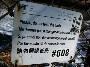 "A sign that says, ""Please, do not feed the birds,"" in five different languages."