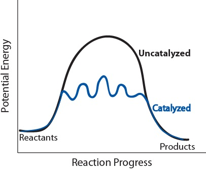 Figure 17.7.2. Potential energy diagram of catalyzed vs uncatalyzed reaction pathway.