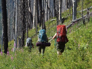 People carrying large backpacks hike through a forest.