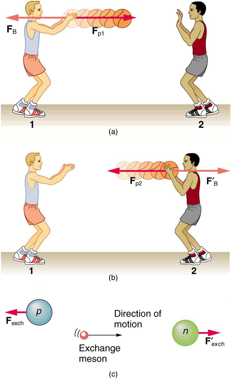 (a) Two persons throwing a basketball to each other. The person on the left is throwing the ball with some force F sub p one, represented by a vector pointing right, in the direction of the motion of the ball. A reaction force F sub B is shown on the person by a vector pointing left. (b) The person catches the ball, exerting a force F sub p two on the ball toward the left, shown by a vector F sub p two toward the left. A reaction force F prime sub B acts on the person, shown by a vector pointing toward right. (c) The exchange of a meson is shown between a proton and a neutron. Both are moving in different directions, and the proton feels a force F sub exch toward the left and the neutron feels a force F prime sub exch toward the right. The meson is also moving toward the right between the proton and the neutron.