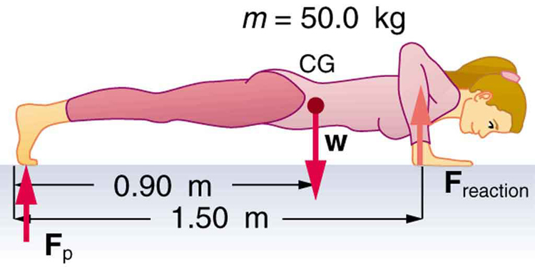 A woman doing pushups is shown. The weight W of her body is acting at the middle point of the length of her body. Her palms are on the ground. The distance between the palm and the feet is one point five meters. The distance between the center of gravity and the feet is zero point nine meters. The normal reaction on her hands is acting upward.