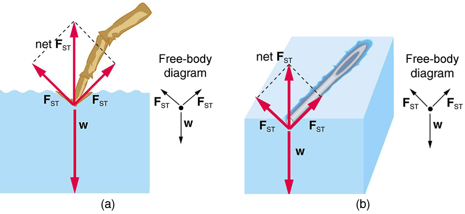 A leg of an insect resting on the water surface is shown in the first figure. In the second figure an iron needle rests on the surface of water without sinking. Both are possible due to the tension on the surface of the liquid.