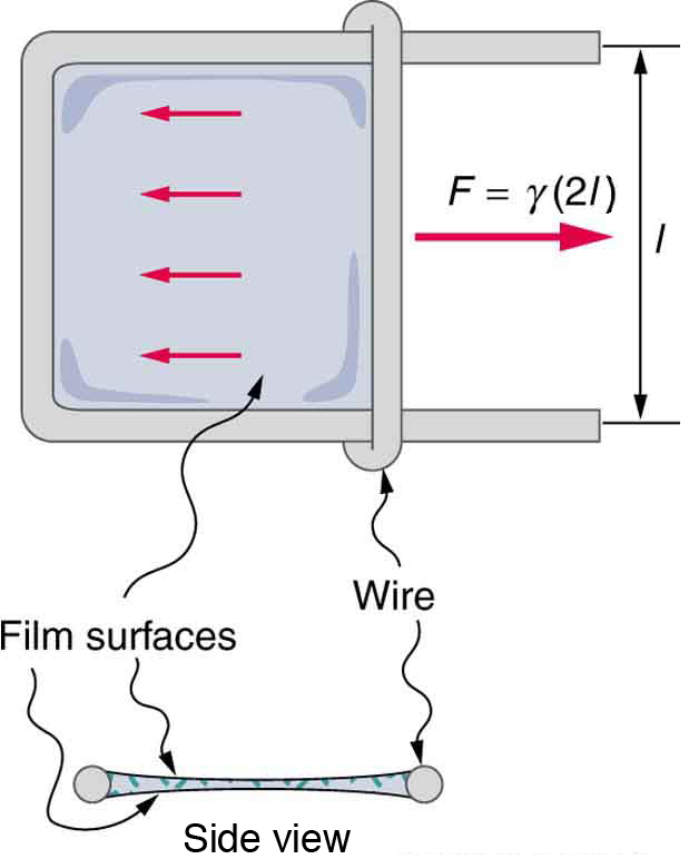 Force Flow Model: Cohesion And Adhesion In Liquids: Surface Tension And