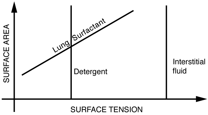 Cohesion and Adhesion in Liquids: Surface Tension and