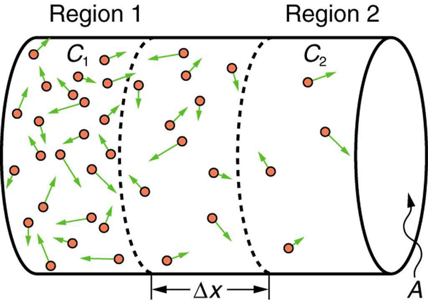 The figure shows the diffusion along a cylindrical tube of area of cross section A. The cylindrical tube is divided into three regions. The cross section is marked as A. The first region is marked as region one. The concentration there is marked C one. The molecules are shown as small sphere with an arrow pointing out from them. The concentration is high in this region. The second region is marked of width delta x. The concentration is lesser in this region as compared to region one. The third region is marked as region two, the concentration in this region lesser than the other two regions shown by lesser number of spherical molecules.