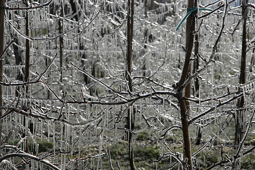 The figure shows bare tree branches covered with ice and icicles.