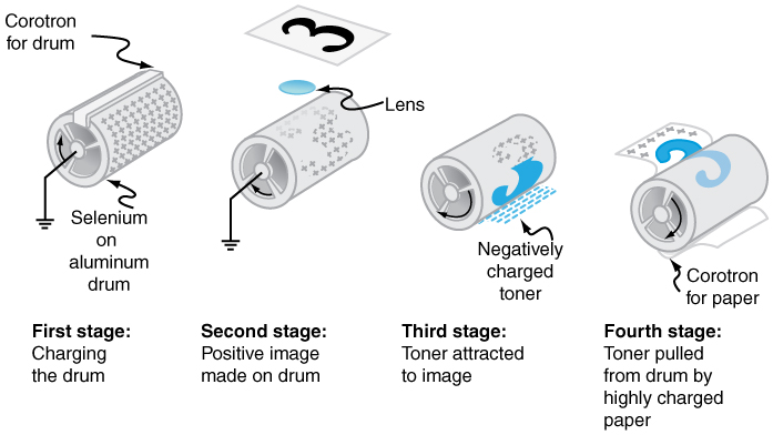Four stages of xerography are shown. A positively charged aluminum drum is shown which is grounded. In second stage image is being transferred to it, creating positive image. In third stage, negatively charged toner is attached with the drum and in fourth stage, toner is pulled by the paper which is highly charged.