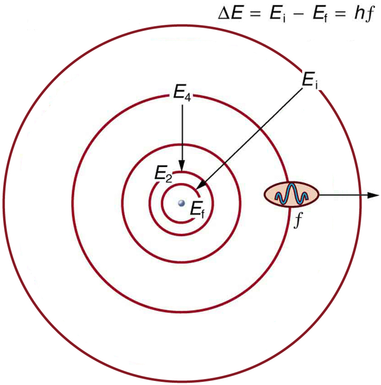 Bohrs theory of the hydrogen atom college physics the orbits of bohrs planetary model of an atom five concentric circles are shown ccuart Images
