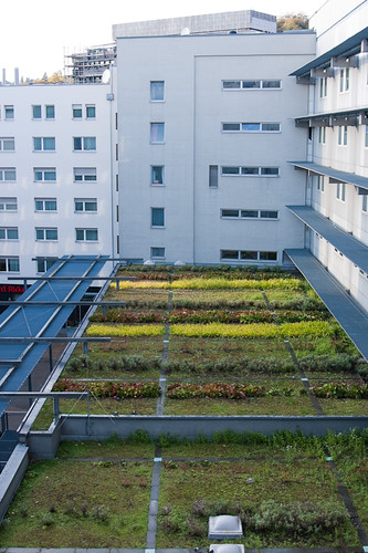 Figure 9.1 Example of an extensive green roof