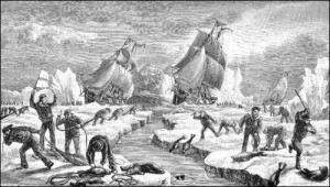 A circa 1883 depiction of the Newfoundland seal hunt. (Source: Joseph Haton & M. Harvey, Newfoundland, the Oldest British Colony (1883).)